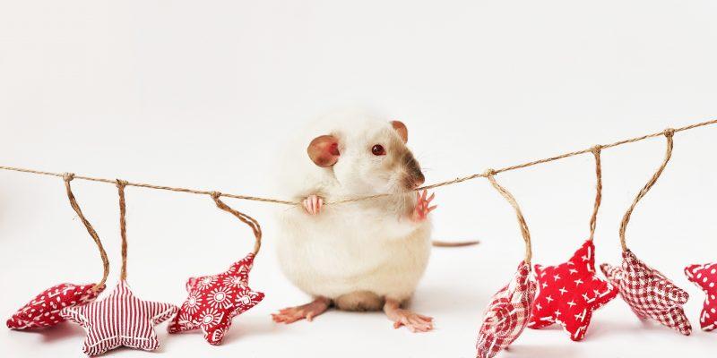 2020 год крысы гороскоп