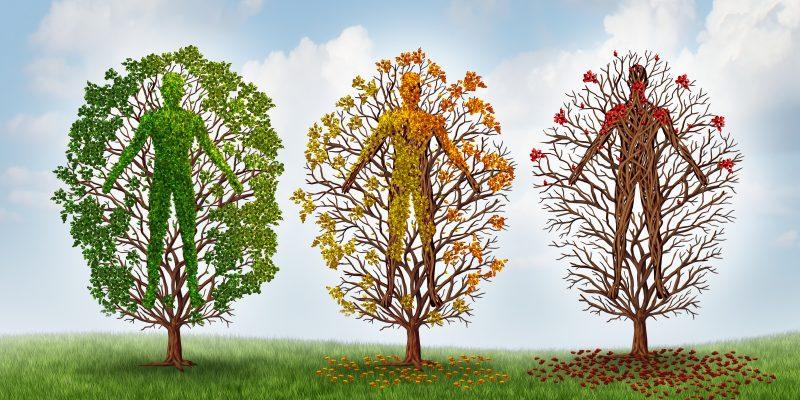 причины старения человека и теории старения