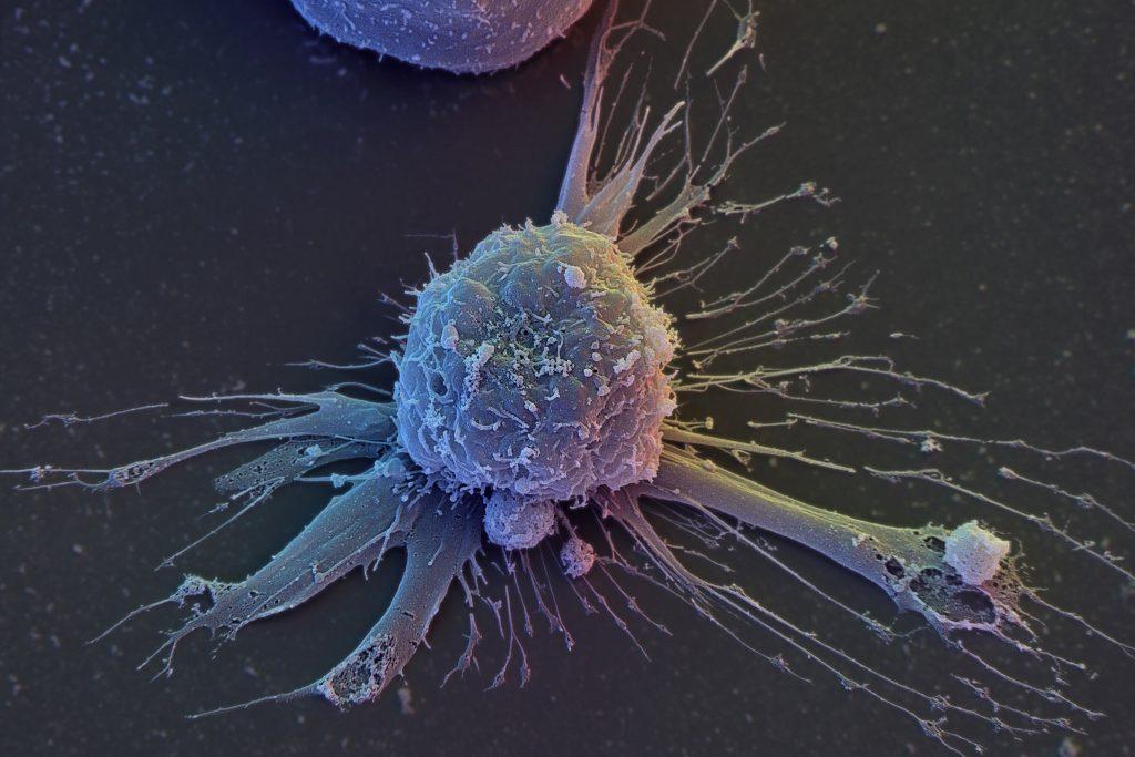 Клеточное омоложение: ученые программируют молодость